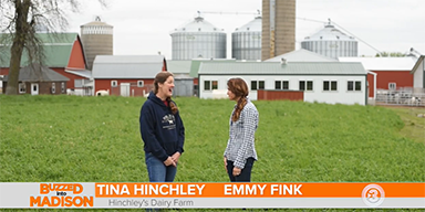 Buzzed into Dairy Month: Hinchley's Dairy Farm